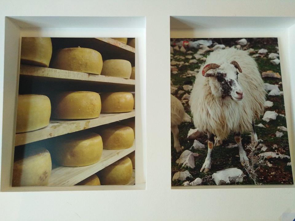 Čuveni paški sir