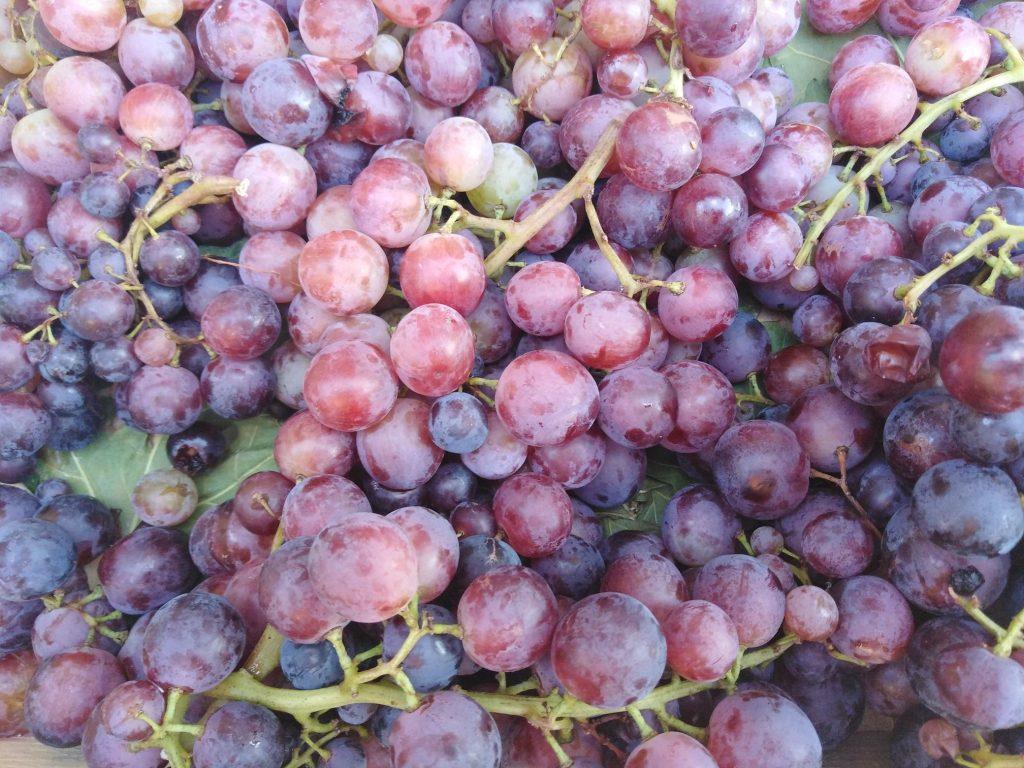 Lepo grožđe